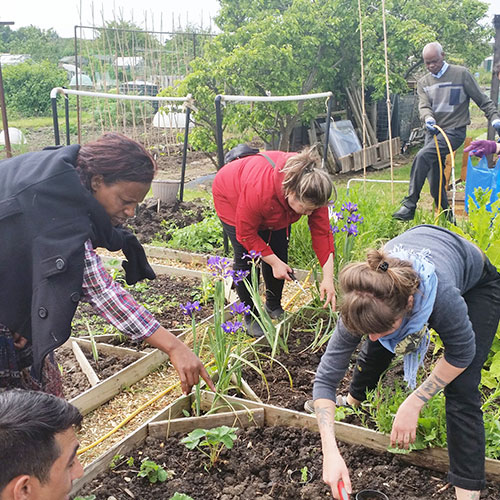 Gardening Project (Ecotherapy)